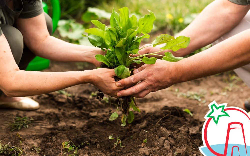 Ventajas de la agricultura ecológica