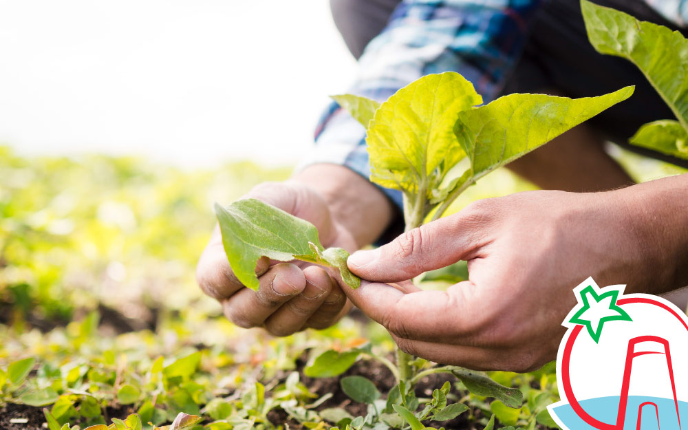 Técnicas de cultivo de la agricultura ecológica